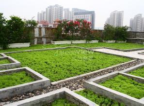 福州4个公建屋顶绿化项目拟5月前完工