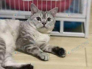 """广州一女大学生租房养猫 称不介意做""""猫奴"""""""