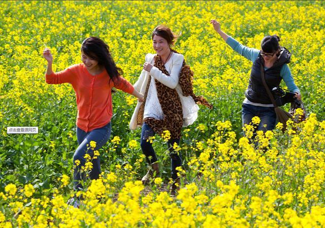 4月清明时节远行踏青正当时 安家立业就要来白云