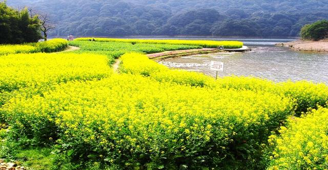 花开遍野的春天到了 广州市内这些地方踏青最惬意