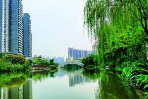 """南沙拟投2.8亿打造""""绿色河道"""""""