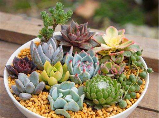 520多肉植物DIY