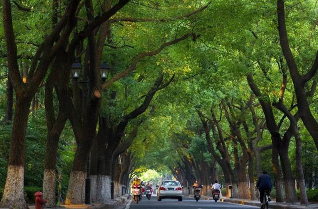 珠三角 3年内建成国家森林城市群