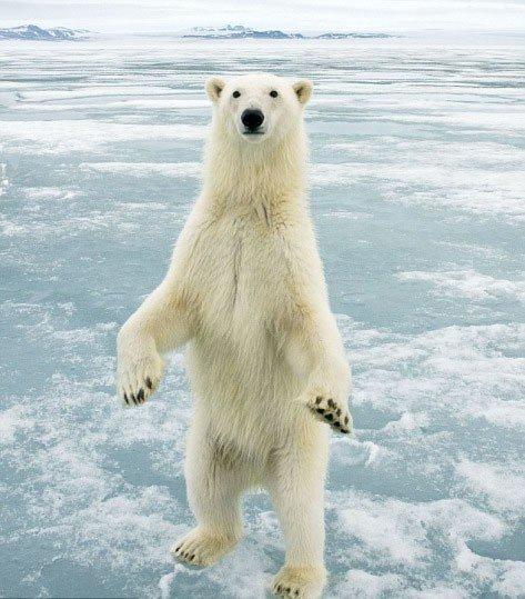 挪威拍到冰上北极熊黄永玉和他的猴子图片
