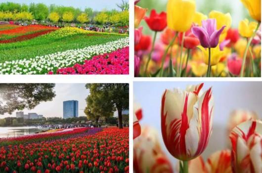 大宁郁金香公园花博会将开幕 交通提示看这里