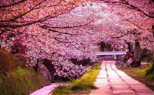 【送花礼】赶春潮 熙悦送你十里樱花