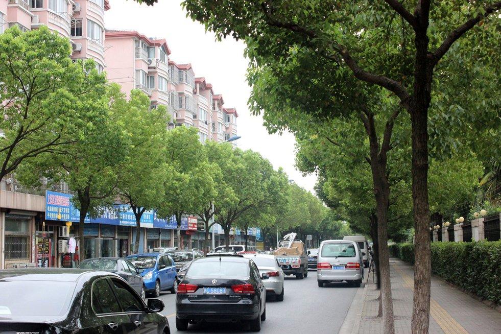 老城区马路较窄且绿荫较密,当有车流经过时稍显拥挤,树枝也会勾到电线,社区周围许多小商铺,老城和新城划分并不十分明显,购物、餐饮、就医、上学均可以资源共享。