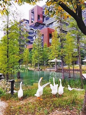 而在位于深圳机场附近的 泰华梧桐岛 ( 详情图库团购点评 ) 总部园区