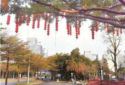 深圳年味浓了 190条道路悬挂灯笼10万个