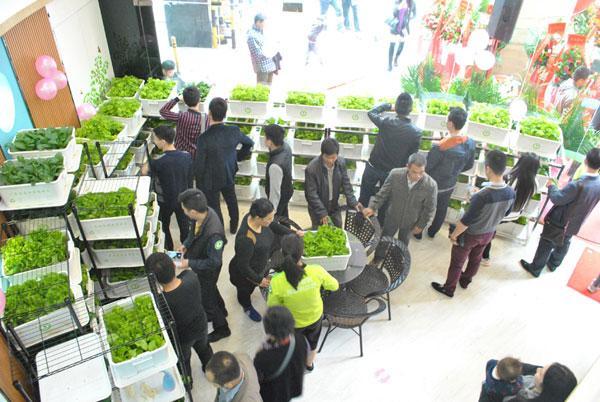 酒店首个百家蔬菜全国v酒店店在鹏城亮相情趣女友盆栽图片