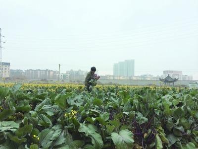 武汉天价地10年只种菜 赚回土地开发价值需200年