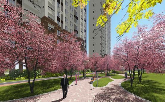 没有一颗樱花树 比回家路上的更美