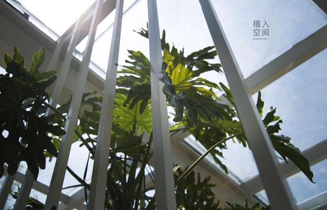 从斯坦福走出的花房庭院_房产武汉站_腾讯网农村小姑娘设计图图片