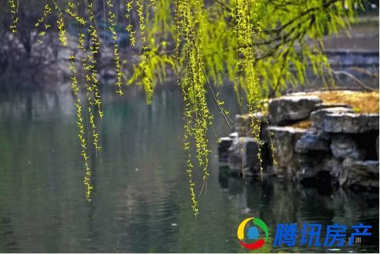 泰禾蓝山院子:初夏依旧,莺啼闻翠柳