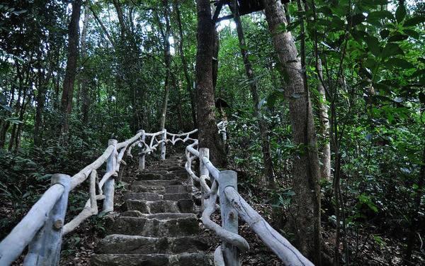 腾讯房产再出发!美在自然妙在原始 体验不一样的森林之旅