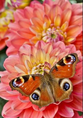 小长假去哪儿?世界珍稀蝴蝶帮你开启缤纷夏天!