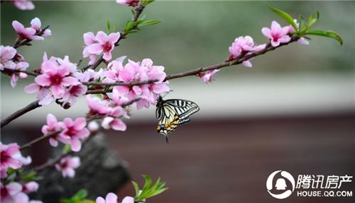 初春时节 五大优质生态楼盘带你领略满园春色