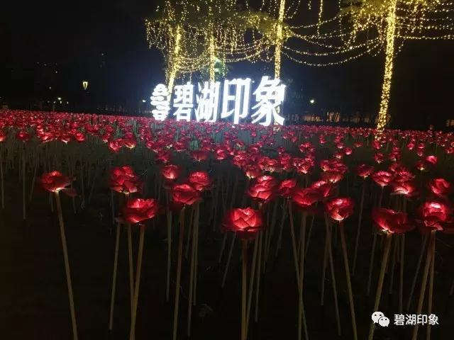 惊呆!10000朵玫瑰银河在碧湖绽放,美哭!