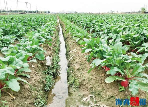 厦门昨再次实施人工增雨 同安翔安农田多数土壤变湿润
