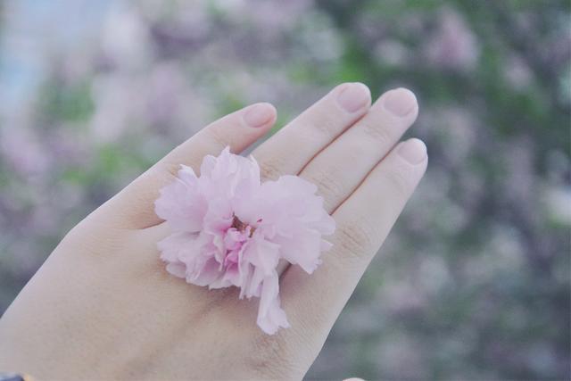 想要收集一整个春天的白雪给你——广厦的情书