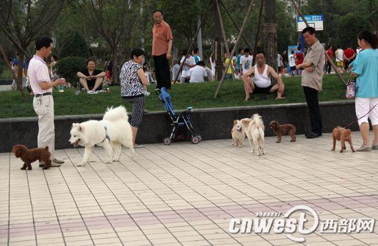 陕西禁止城镇居民在高层住宅饲养大型犬烈性犬