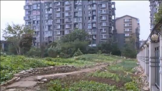 对于德阳有些小区的绿化 有句mmp不知当讲不当讲!
