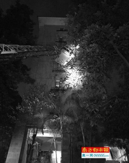 """东莞一小区树上藏""""雷"""" 消防员乘云梯摘了"""