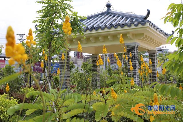 东莞再添一个超美的公园 占地三万六千多平