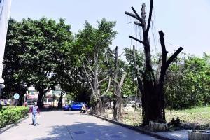 小区大树被砍 绿地要变停车场?