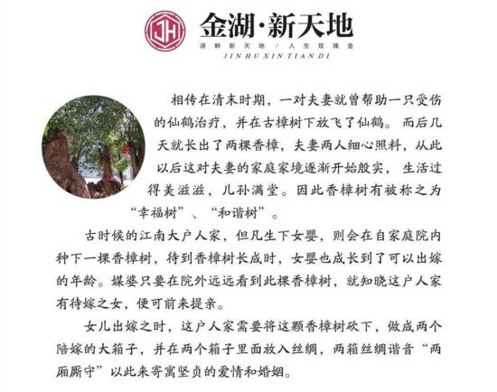 【金湖·新天地】寻觅百年的古香樟 幸福树迎您来鉴赏