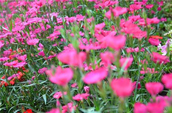 四月时鲜花怒放