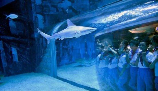 """鲨鱼来了!衡水市大庆路香榭丽都、儿童商城首届""""梦幻鲨鱼灯光节""""来袭!门票免费送!送!送!"""