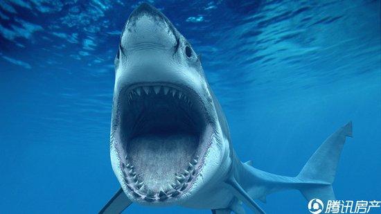 大白鲨的简笔画_霸王龙简笔画