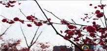 宿州最美生态 三角洲公园