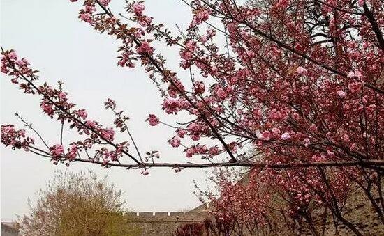 """荆州最美的花在这 有些人要""""小心""""......"""