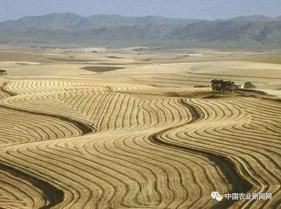格兰春天首玺:泸州可能要取消农村户口了,抓紧时间办里这些事情,不然要吃大亏!