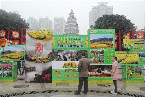 古蔺县双沙镇2014年双沙菜花