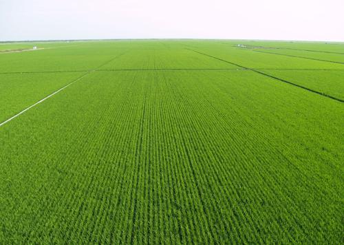 """国务院:耕地保护将强化数量质量生态""""三位一体"""""""