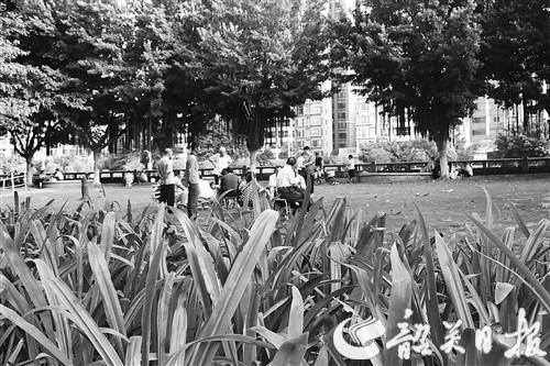 曲江区大力推进城区绿化工作 打造生态美城