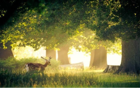 金地保利·半山麓案名荣耀发布:树深时见鹿 溪午不闻钟