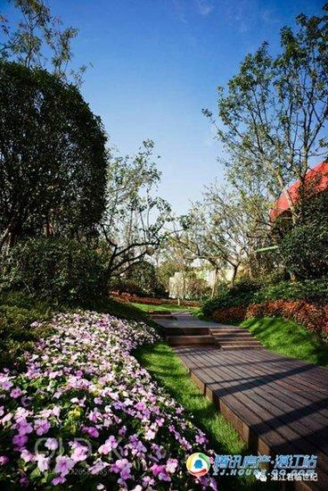 最美的风景与心情不在远方,不如在家中散个步吧