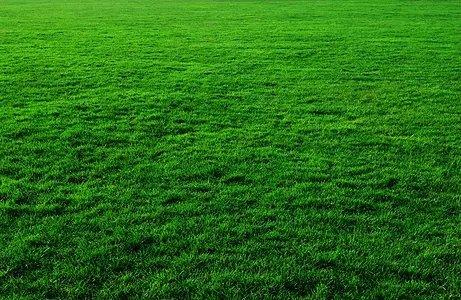湛江三大绿化指标已达标