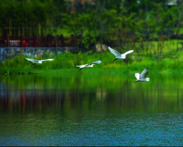 壁纸 动物 风景 鸟 摄影 桌面 359_287