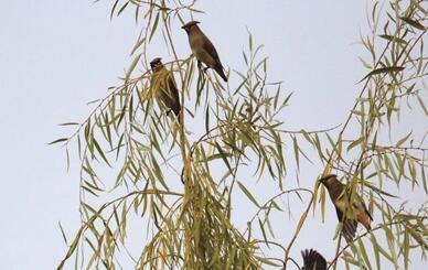 南京冬天该去哪儿看鸟?