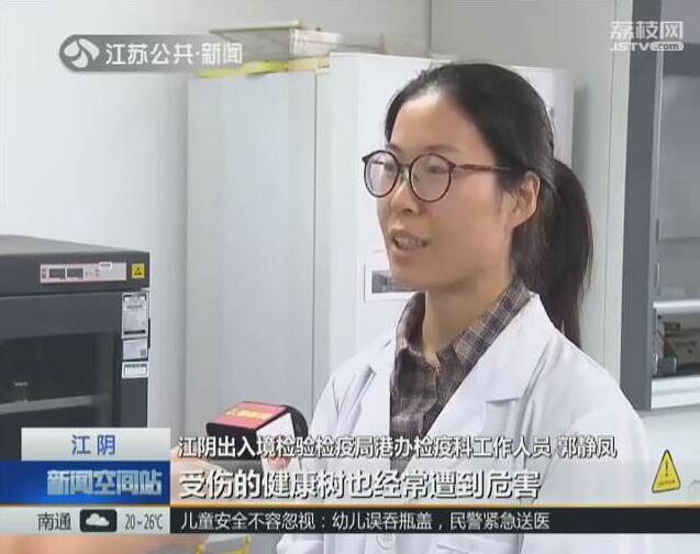 无锡江阴口岸首次截获检疫性有害生物长林小蠹