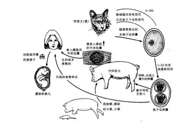 """扬州5岁男童眼睛成""""虫窝"""" 虫子已寄生近两年"""