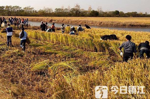 江苏大学80多名中外学子进农场 感受古城丰收喜悦