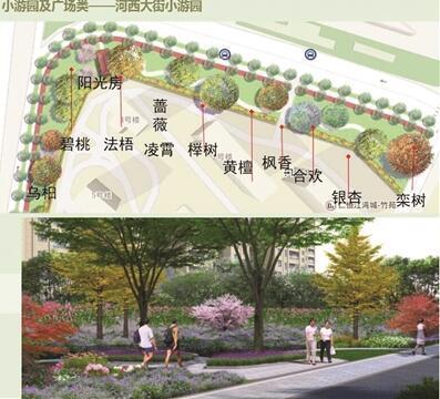 """南京启动绿化改造工程 街头老迈杨树逐步""""退役"""""""