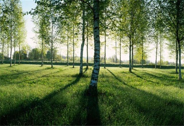 2018—2020年 南京市将新增绿化造林10万亩