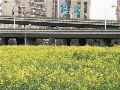 麦扑手绘桥